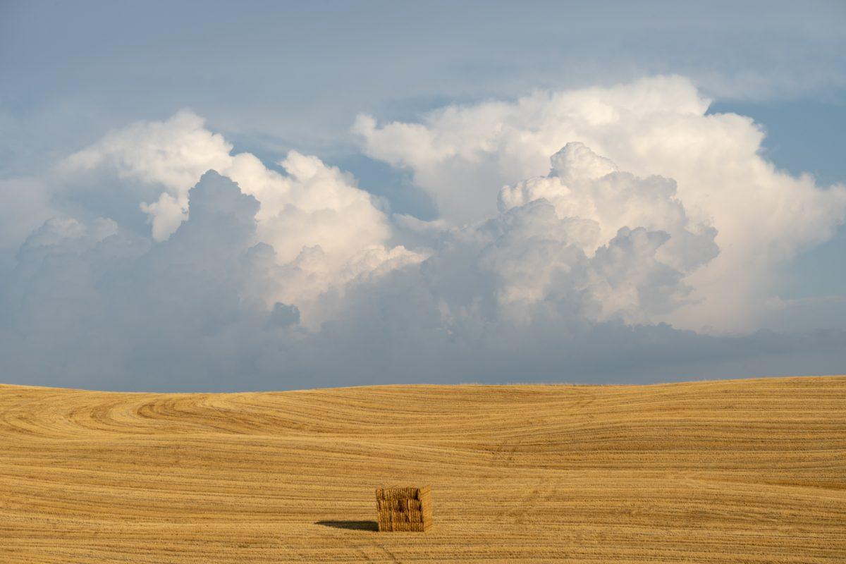 One bale of hay in field under a blue sky.